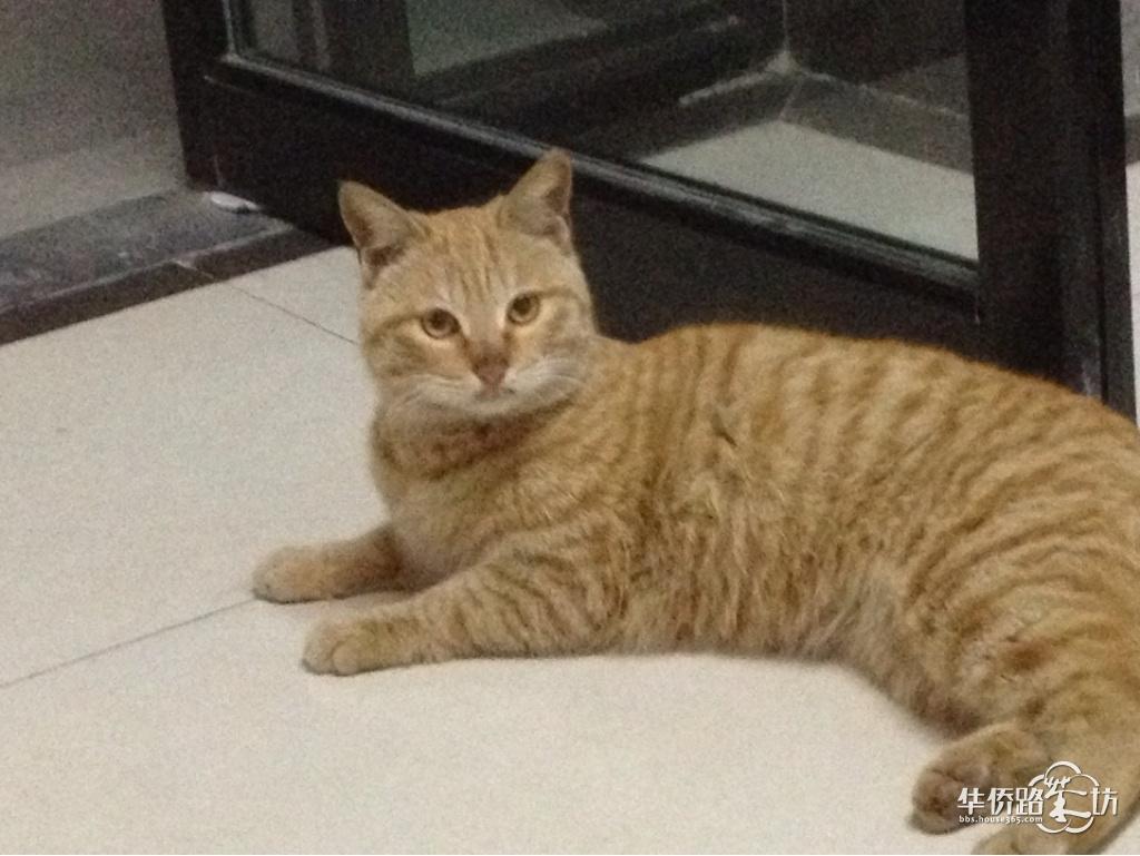 很可爱的一只特别温顺的猫咪